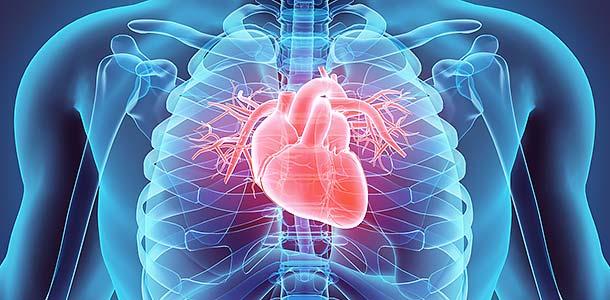 Imagen en 3D de un corazón, esquema médico.